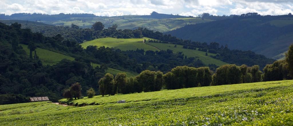 Landscape_at_Mufindi,_Tanzania